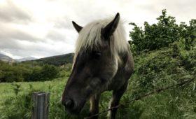 Camino horse