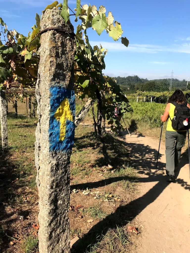 Vineyards on the Portuguese Camino